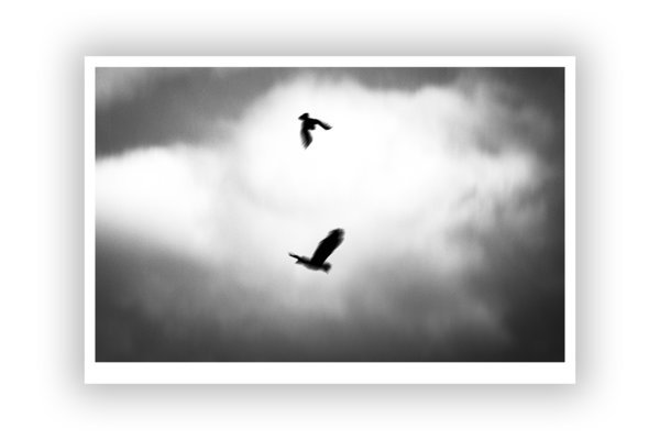 FineArt Print – Crows 2