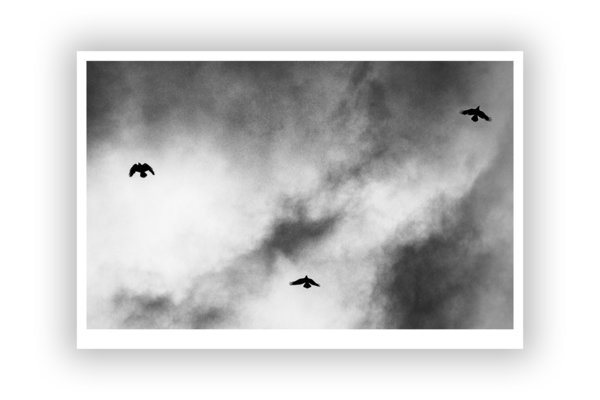 FineArt Print – Crows 3