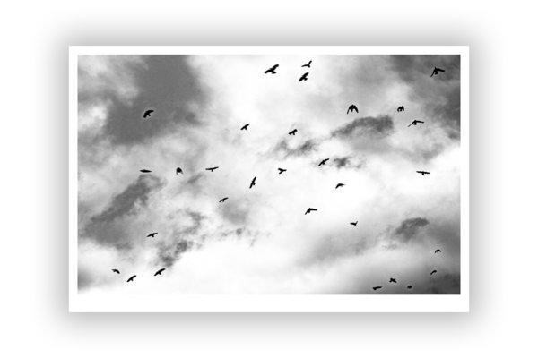 FineArt Print – Crows 4